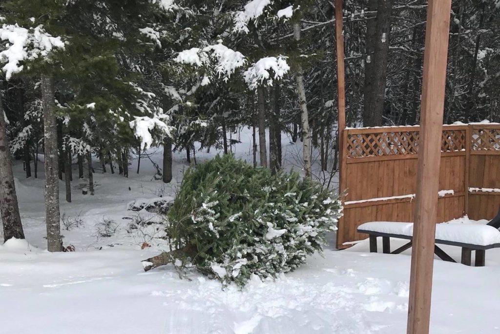 Berikan pohon Natal asli Anda kehidupan kedua sebagai habitat burung - Ashcroft Cache Creek Journal