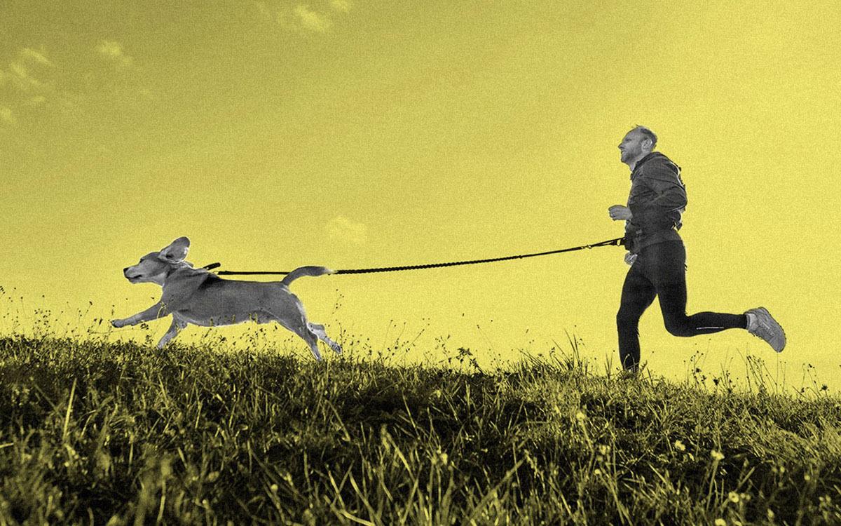 Segalanya yang Perlu Diketahui Sebelum Anda Berlari Bersama Anjing Anda